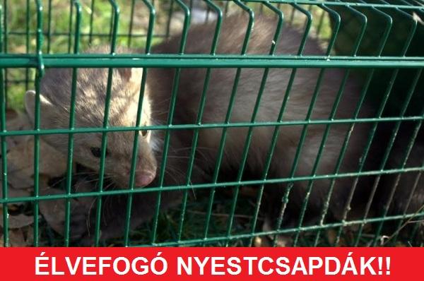 élvefogó_nyestcsapda